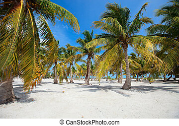 Palm trees at tropical coast in Holbox island Mexico