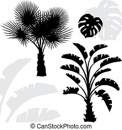 Palm trees black silhouettes on white background.