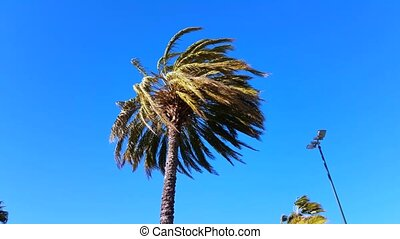 Palm Trees Blow in Strong Wind