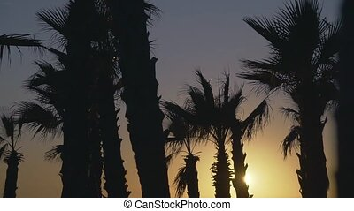 Palm trees blowing against the wind in sunset sky background
