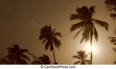 palm trees blowing at the sunset