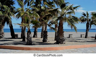 Palm trees blowing in the wind. Mediterranean sea, Spain