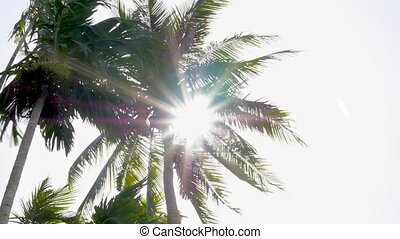 Palm Trees Blowing in the Wind on Sunny Day. Speed up.
