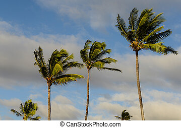 Palm Trees Blowing in the Wind