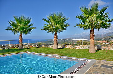 Palm Trees by the pool