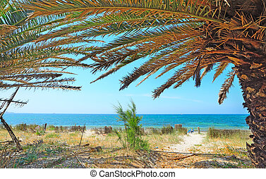 palm trees by the sea in Alghero