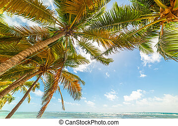 Palm trees by the sea in Bois Jolan beach