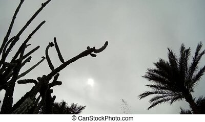 Palm Trees cactus silhouette against cloudy Sky