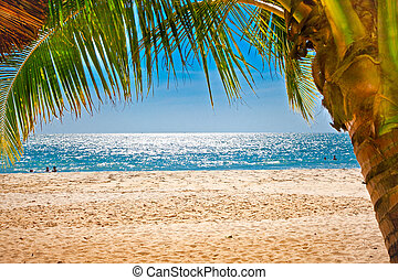 Palm trees gateway to sand beach in Cambodia. - Palm trees...