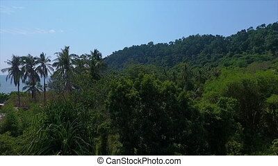 Palm trees in a forest - An high angle shot of a part of a...