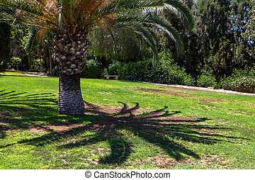 Palm trees in a park