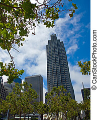 Palm Trees in an Urban Setting with Modern Buildings - San Francisco, CA USA
