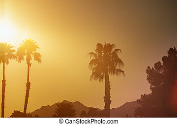 Palm trees in Arizona at sunset