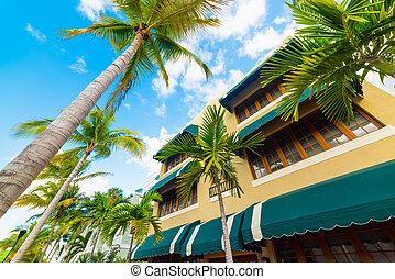 Palm trees in beautiful Miami Beach