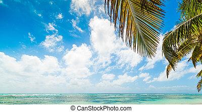 Palm trees in Bois Jolan beach