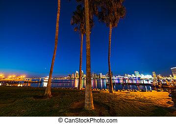 Palm trees in Coronado island