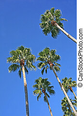 Palm Trees in Florida with Bright Blue Sky