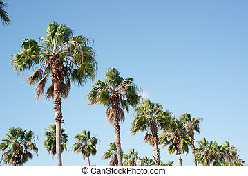 Palm Trees in Fort Pierce