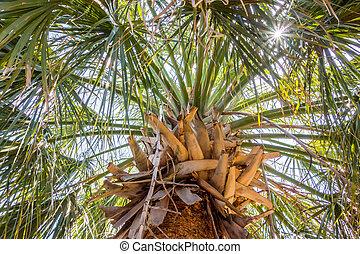 palm trees in georgia state usa