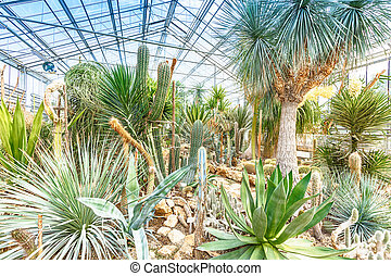 Palm trees in glasshouse