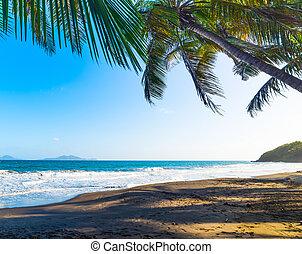 Palm trees in Grande Anse beach