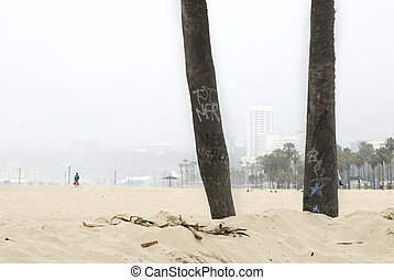 Palm trees in haze, Venice Beach