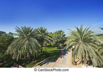 Palm Trees in Jumeirah, Dubai, United Arab Emirates