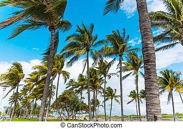 Palm trees in Miami Beach
