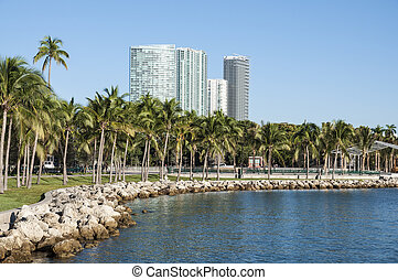Palm Trees in Miami, Florida, USA