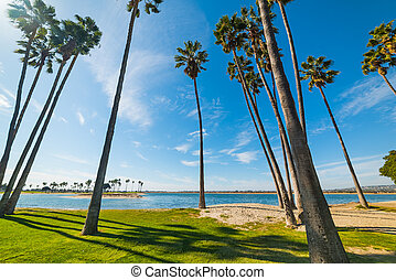 Palm trees in Mission Bay