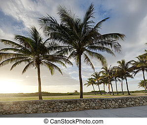 Palm Trees in Morning