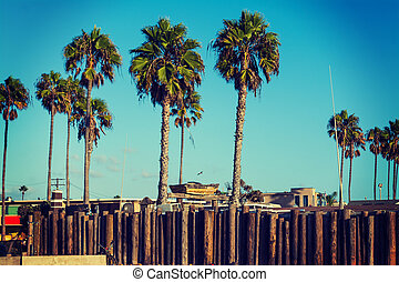 palm trees in Newport Beach
