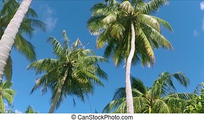 Palm trees in paradise - sun shining through leaves