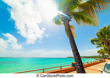 Palm trees in Sainte Anne seafront in Guadeloupe, French west indies. Lesser Antilles, Caribbean sea