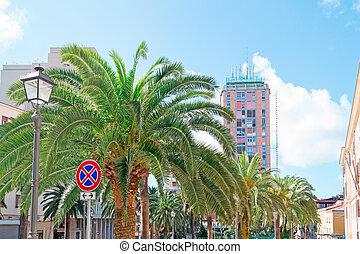 palm trees in Sassari
