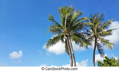 palm trees in the blue