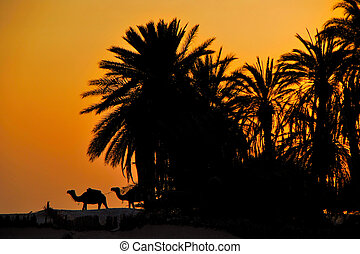 palm trees in the desert at sunset