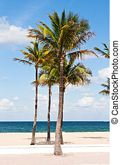 Palm trees in the Fort Lauderdale