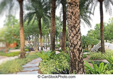 Palm trees in the park pathway