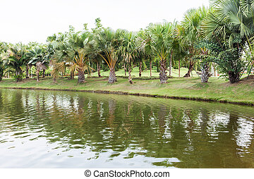 Palm trees in the park with a riverbed