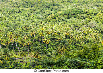 Palm Trees in Tropical Rain Forest