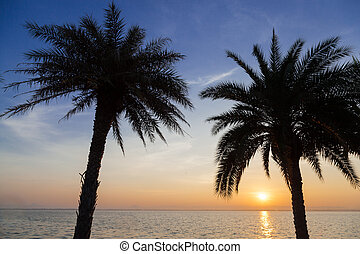 Palm trees, lake in the morning.