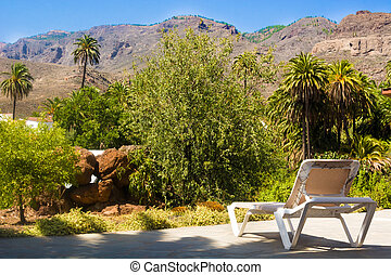 Palm trees landscape. In the midst of nature. Gran Canaria Island. Rural holidays.