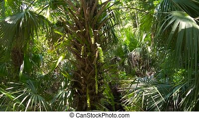 Lush green foliage in tropical jungle - Palm trees leaf at...