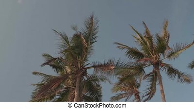 Palm trees leaves sway in the wind against blue sky background