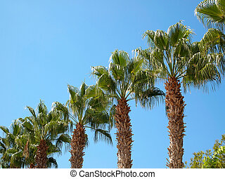 Palm trees located diagonally against the blue sky