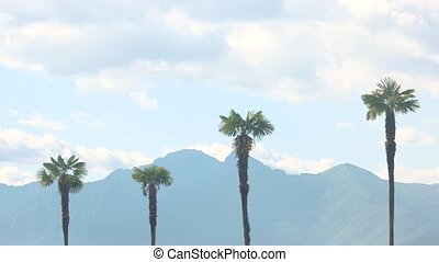 Palm trees, mountains and sky. - Palm trees mountains and...
