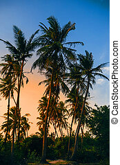 palm trees on a background of blue sky with sunlight