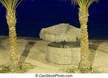 Palm trees on a beach at night