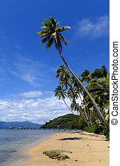 Palm trees on a beach, Vanua Levu island, Fiji, South ...
